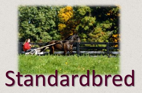 standardbred