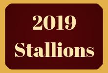 2019 Stallions