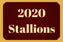 2020 Stallions