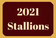 2021 Stallions